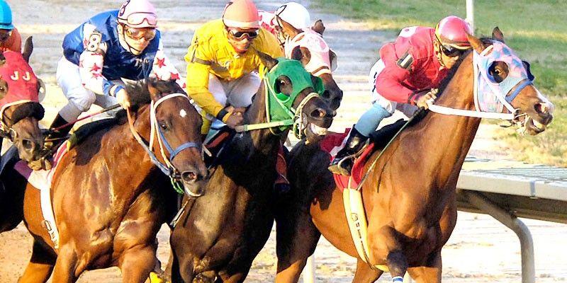 Satılık Yarış Atı İlanları