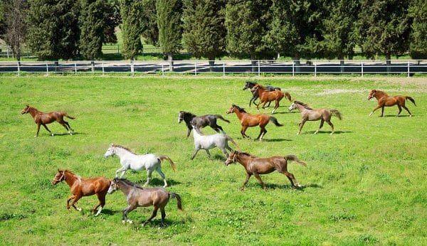 Yarış Atı Çiftliği